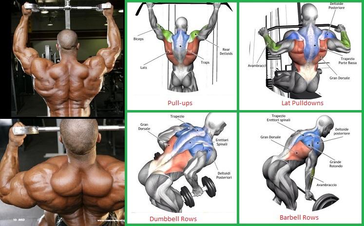 Back Exercises chart