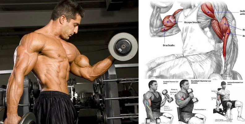 Exercises to Build Big Biceps