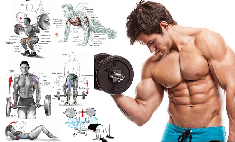 Workouts for Fast Muscle Building