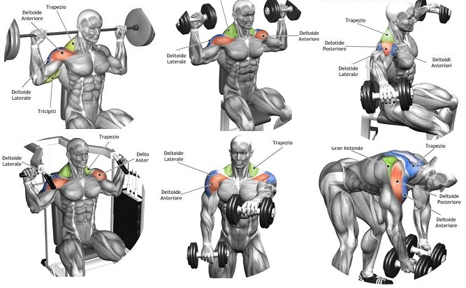 Best Shoulder Workouts