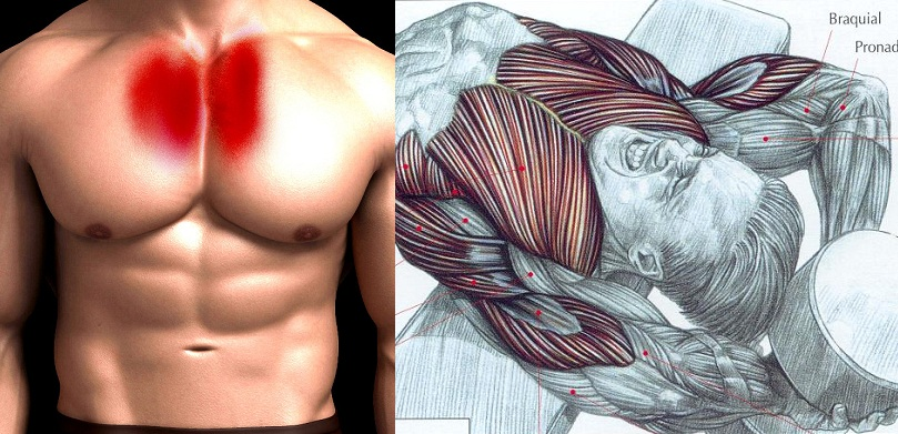 Building Chest Muscles!