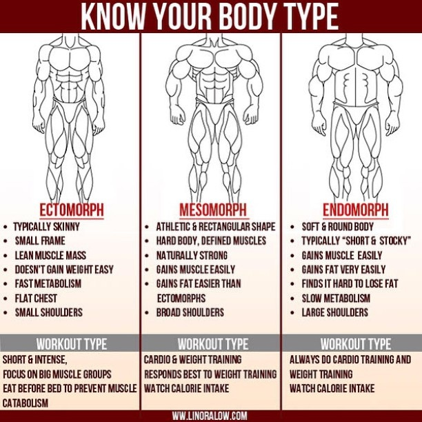 Body Types and Body Building Muscle