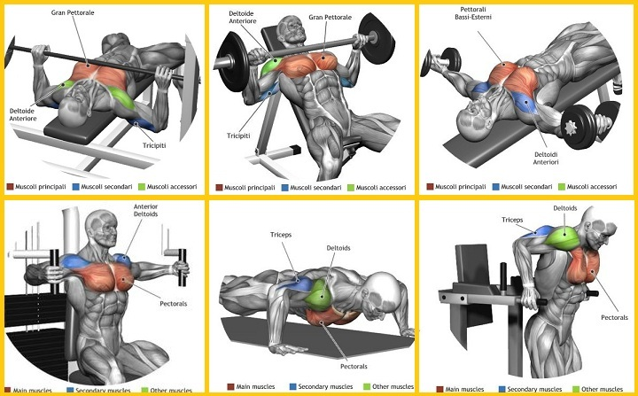 6 Best Chest  Exercises
