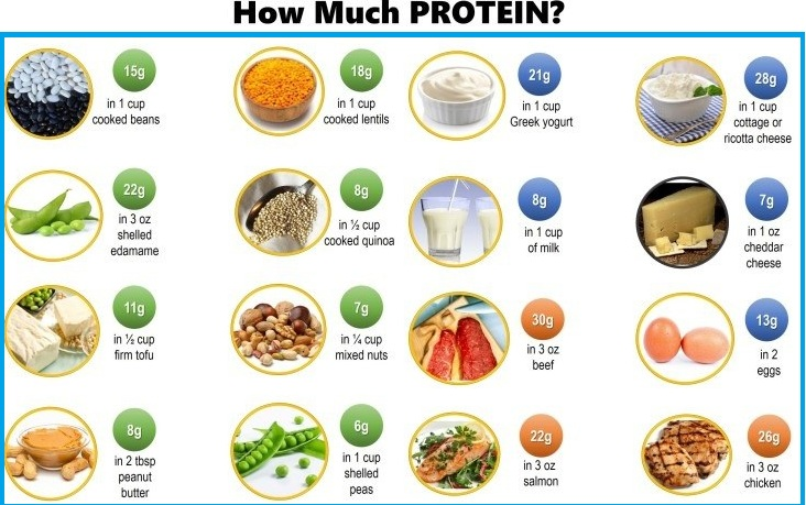 Sources of Muscle Building Proteins