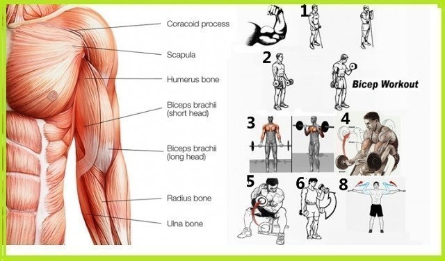 Bicep Routines