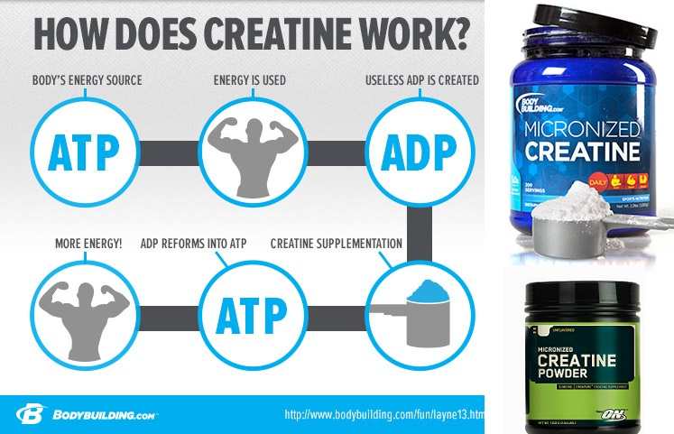 Creatine Effects on the Body