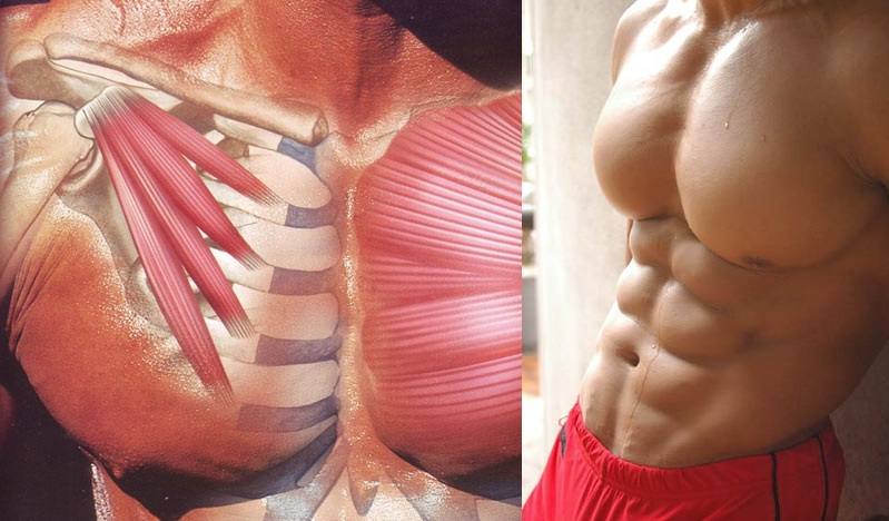 How to Get a Ripped Chest in 6 Weeks