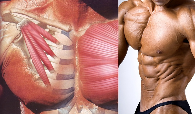 How to Get the Most From Your Chest Workout