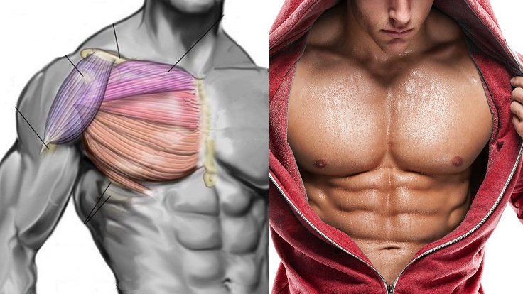 What You Must Do to Get a Great Chest