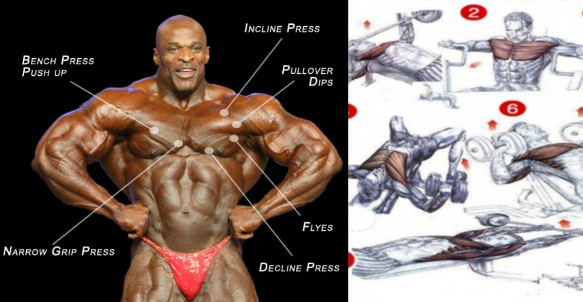 Developing Your Inner Pectorals