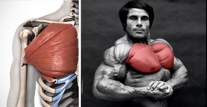How to Build Pectoral Muscles