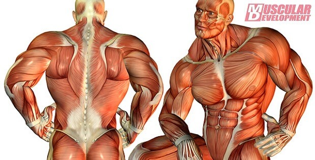 The Top 10 Muscle Building Facts