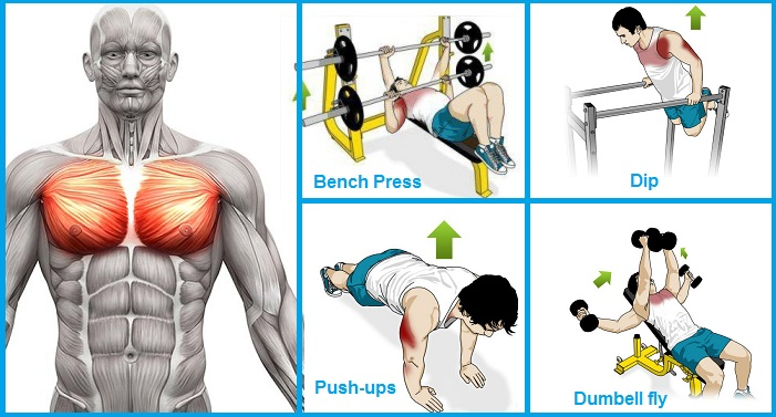 Exercises to Build Chest Muscle Fast