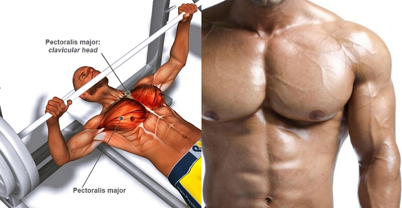 How to Bench Press With Proper Technique For a Big Chest