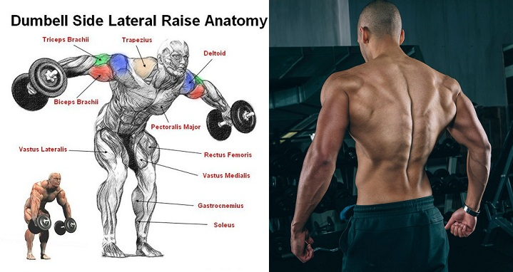 Shoulders  Lateral Raise Exercise