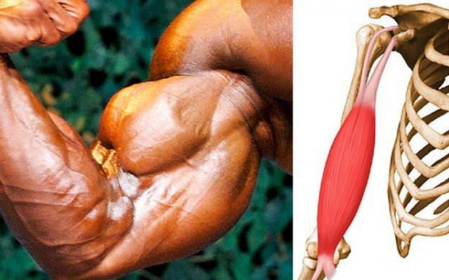 Biceps Injuries