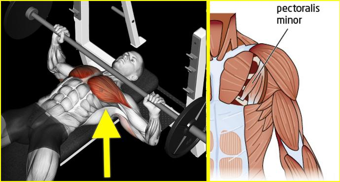 Building Chest Muscles in Quick Time