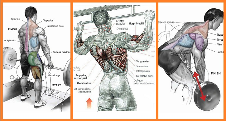 3 Mass Building Back Exercises