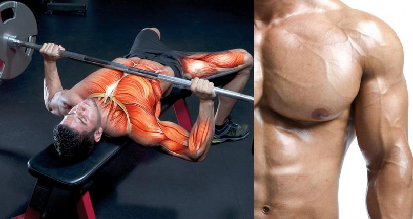 Bench Press For Adding Muscle