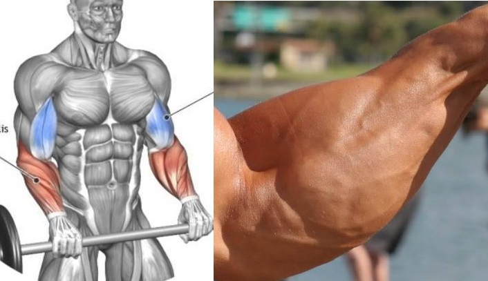 Build Forearms - 6 Steps to Monster Forearms