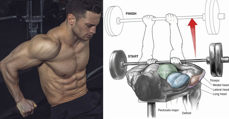Building Triceps and Chest