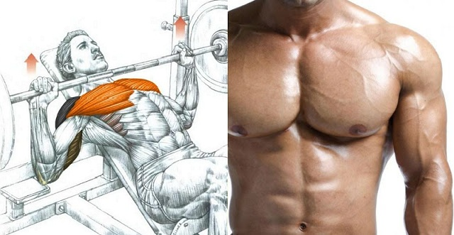 How to Build Chest Muscle