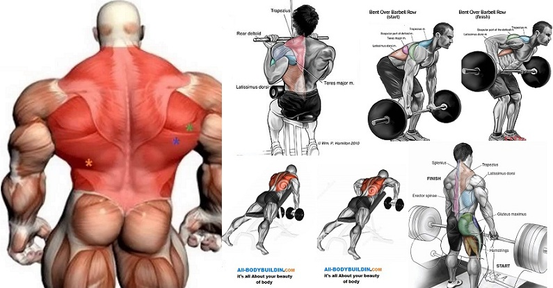 How to Get a Ripped Back in 6 Weeks