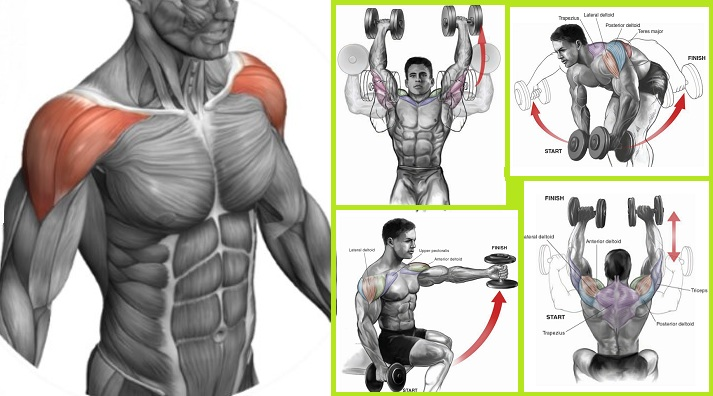 Exercises For the Shoulders to Build the Deltoids