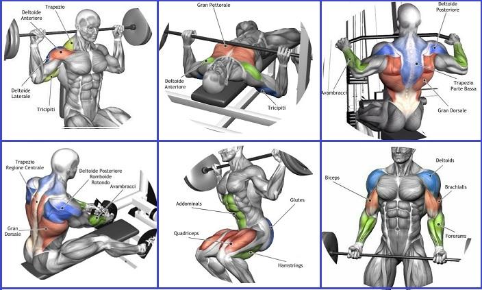 The Must Do Exercises for Beginning Bodybuilders