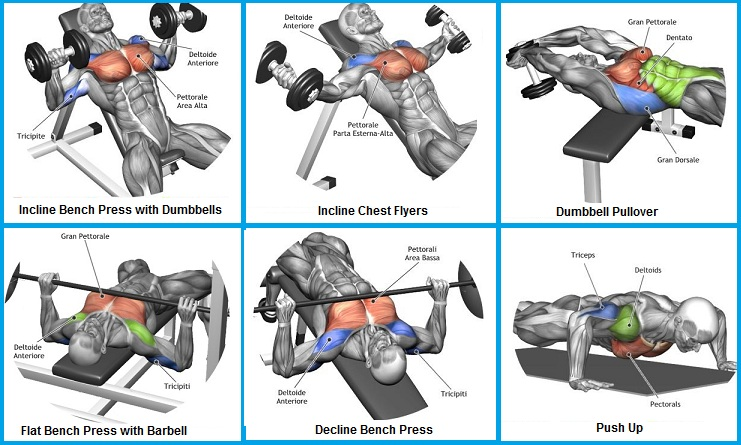 Top 6 Exercises to Build Chest Muscles