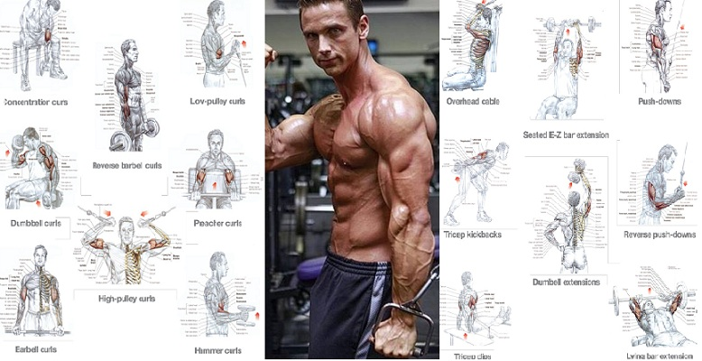 Top Ten Exercises For Toning the Upper Arms