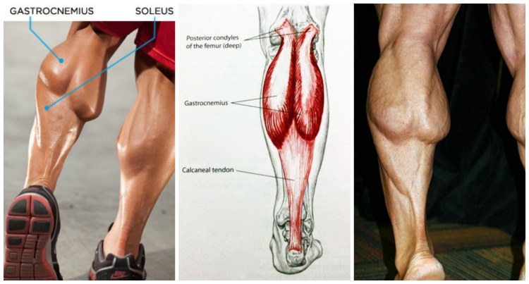 Two Top Mistakes Made In Calf Muscle Training