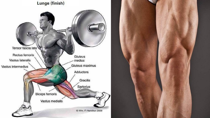 Doing Leg Workouts Alone Make You Ripped?