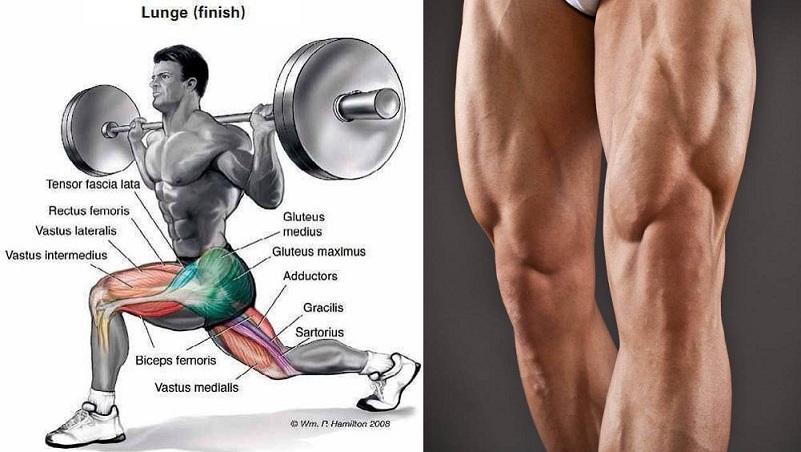 Doing Leg Workouts Alone Make You Ripped?