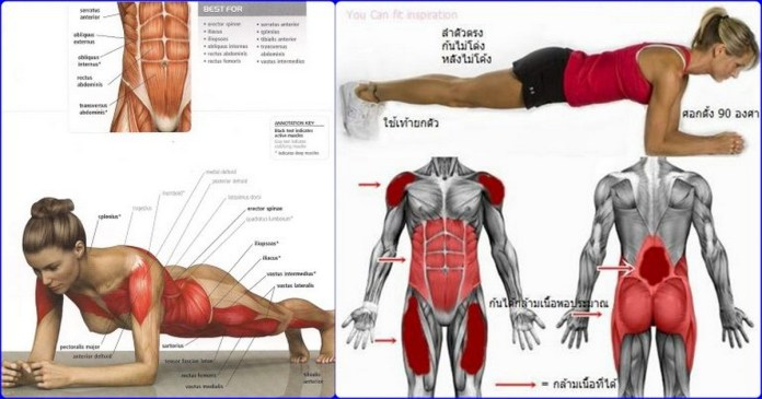 Plank Exercise Benefits For a Powerful Abs Workout