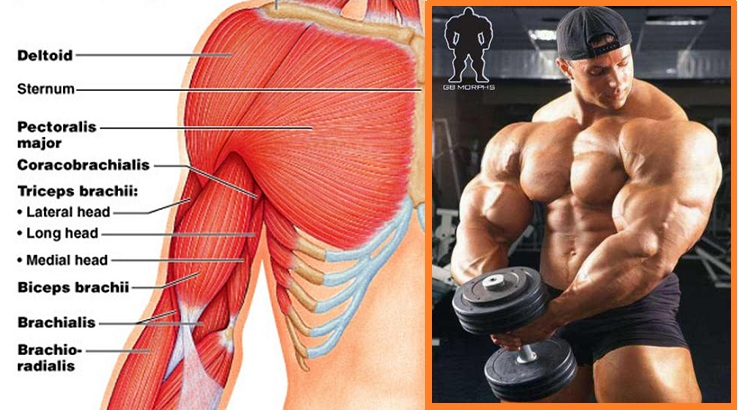 The Things That Can Hinder the Growth of Muscles