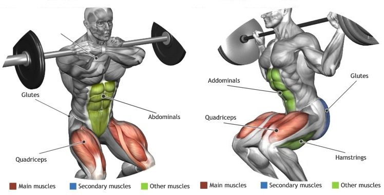 Why Squats Are Essential to Your Bodybuilding Routine