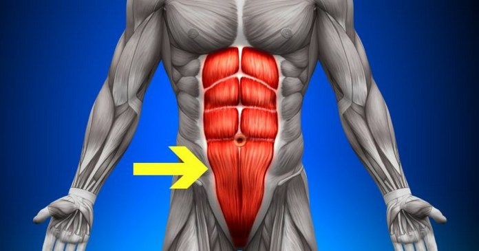 How to Build Specifically Lower Ab Muscles