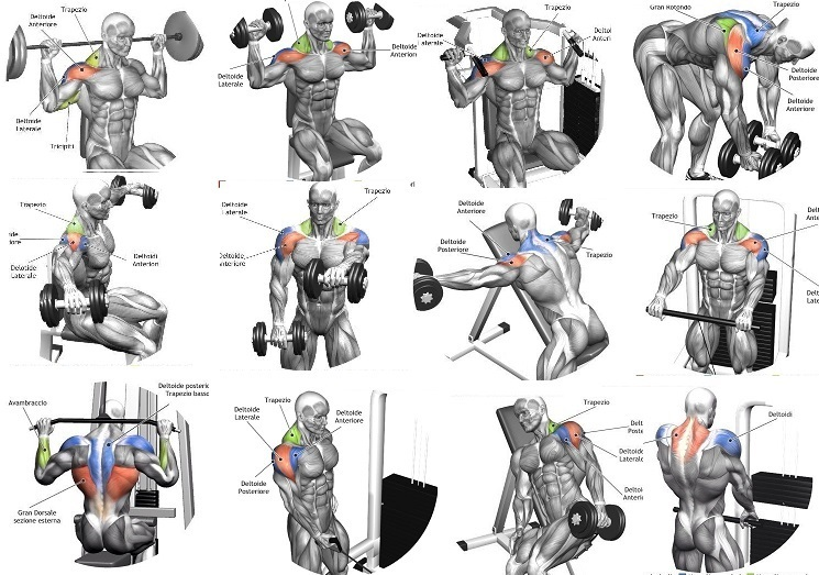 Shoulder Workout Routines