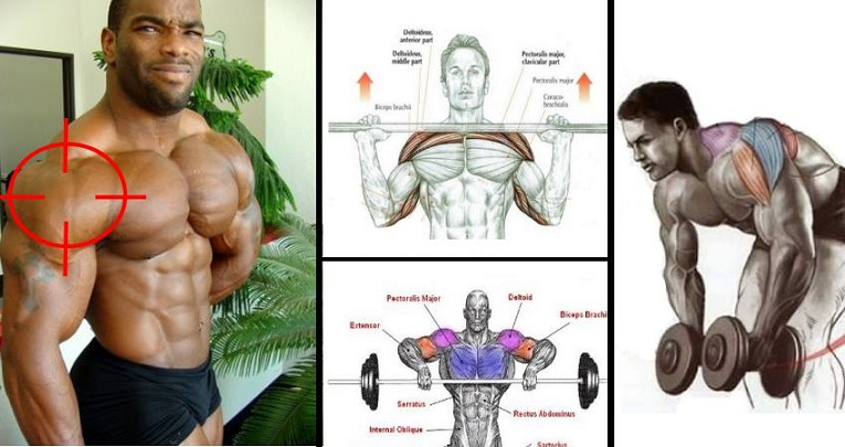 The Best Shoulder Workout Weightlifting Routines