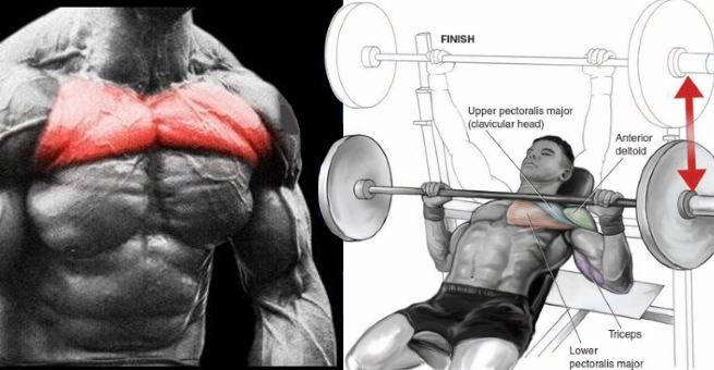Upper Chest Workouts - Get Maximum Definition With These Upper Chest Exercises