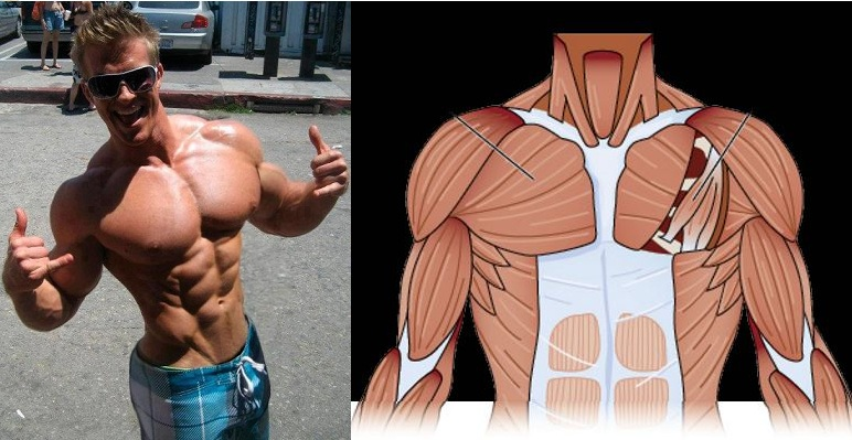 How to Get a Bigger Chest for a More Attractive Body
