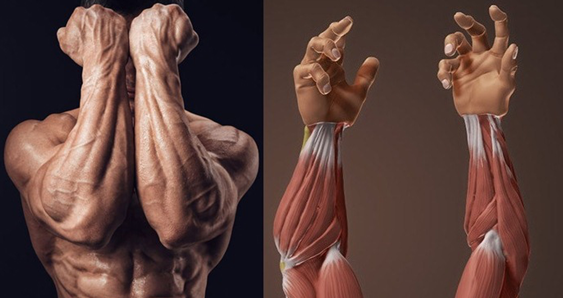 Blow Up Your Forearms With 4 Exercises !
